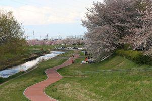 御伊勢橋から望む小畔川の遊歩道と桜