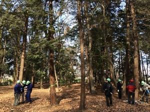 枝打ちのために一本はしごとワンステップラダーによる枝打ち体験