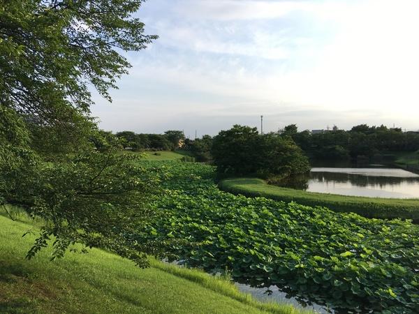 身近なグリーンインフラ「小畔水鳥の郷公園」